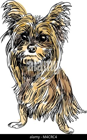 An image of a sketch of a Yorkshire terrier dog. - Stock Photo