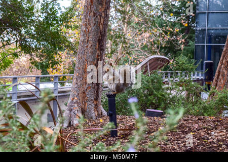 American squirrel is sitting on a stick in front of bushes - Stock Photo