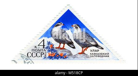 USSR - CIRCA 1973: Postage stamp printed in USSR shows Caucasian ular (lat. Tetraogallus caucasicus). The series - Stock Photo