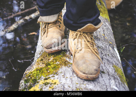 Stands on wooden trunk. Forest environment. - Stock Photo