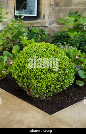 Small corner of beautiful, landscaped, private garden with contemporary design, paved patio, border shrubs & plants - Stock Photo