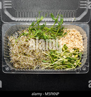 Different types of micro greens in plastic container on black background. Healthy eating concept of fresh garden - Stock Photo