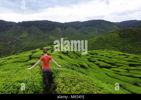 Western woman in orange outfit walking among tea fields on tea plantations in Cameron Highlands, Malaysia. - Stock Photo