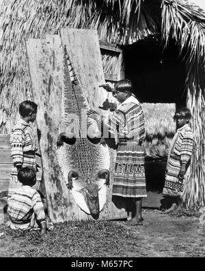 1920s 1930s SEMINOLE NATIVE AMERICAN INDIAN MAN FATHER SHOWING BOYS SONS HOW TO STRETCH AND TAN ALLIGATOR SKIN HIDE - Stock Photo