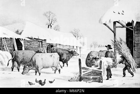 1800s ILLUSTRATION OF COLONIAL AMERICAN FARM IN WINTER FARMER AND BOY FEEDING CATTLE - o3844 LAN001 HARS COPY SPACE - Stock Photo