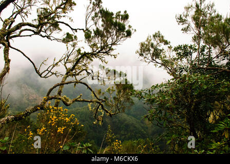 Forest of Madeira island, Portugal - Stock Photo