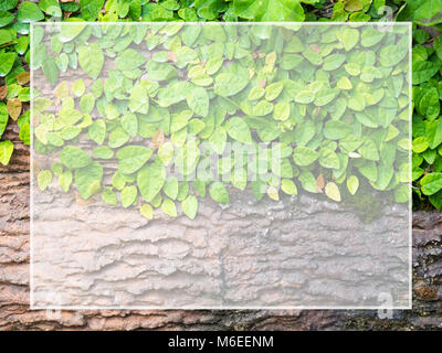 Green leaves stuck on wood White frame for text and content input (Copy Space). Suitable for as background. - Stock Photo