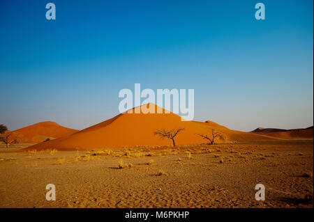 One of the most beautifull is Dune 45 on Namib Naukluft National Park in the Sossusvlei area. Dune 45 is one of - Stock Photo