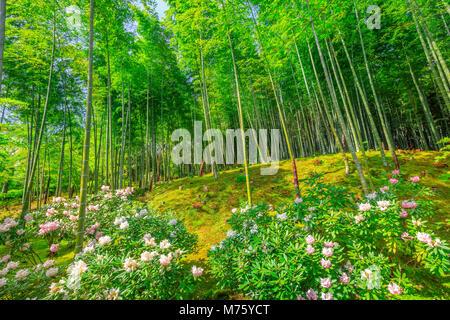 Flowered Japanese garden near bamboo forest of Tenryu-ji Zen Temple in Arashiyama District, Kyoto, Japan. Spring - Stock Photo