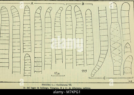Boletin de la Sociedad de Biología de Concepción (1949) (20361332726) - Stock Photo