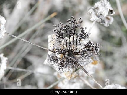 Wild Flowers, seamless Pattern, defocused background - Stock Photo