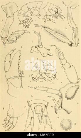 Bulletin biologique de la France et de la Belgique (1892) (19808438033) - Stock Photo