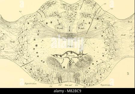 Bulletin biologique de la France et de la Belgique (1902) (20430036425) - Stock Photo