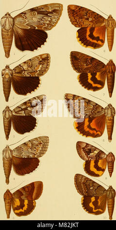 Catalogue of the Lepidoptera Phalænæ in the British museum (1913) (20582049785) - Stock Photo