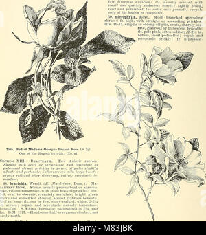 Cyclopedia of American horticulture, comprising suggestions for cultivation of horticultural plants, descriptions - Stock Photo