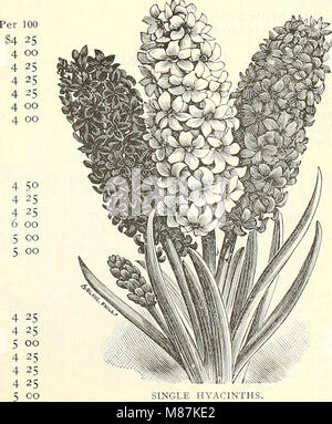 Dreer's wholesale price list summer edition 1902 July to August - seasonable flower and vegetable seeds, fertilizers, - Stock Photo