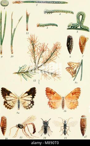 Die Forstinsekten Mitteleuropas. Ein Lehr- und Handbuch (1914) (20728956778) - Stock Photo