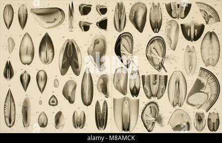 Die Mytiliden des Golfes von Neapel und der angrenzenden Meeres-Abschnitte, I. Teil (1902) (20313532093) - Stock Photo