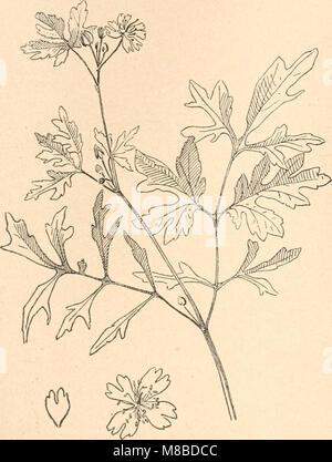 Das werden der organismen zur widerlegung von Darwins zufallstheorie durch das gesetz in der entwicklung (1922) - Stock Photo