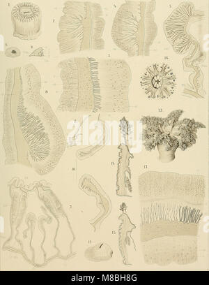 Denkschriften der Medicinisch-Naturwissenschaftlichen Gesellschaft zu Jena (1894) (20233481424) - Stock Photo