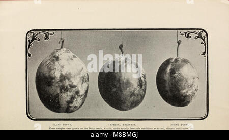 Descriptive catalogue of deciduous and citrus fruit trees grape vines, small fruits ornamental trees shrubs, roses - Stock Photo