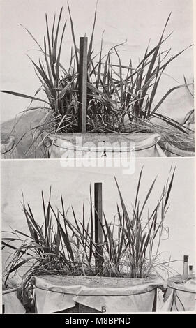 Development and activities of roots of crop plants; a study in crop ecology (1922) (20269669173) - Stock Photo