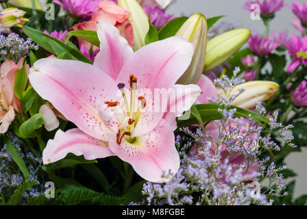 close-up view lilie, Lilium sp - Stock Photo