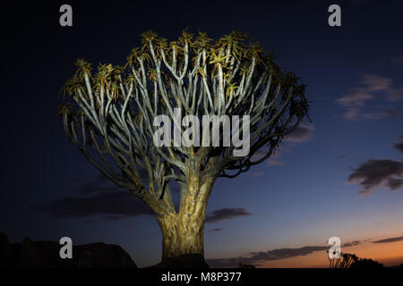 The quiver tree forest near Keetmanshoop, Namibia - Stock Photo