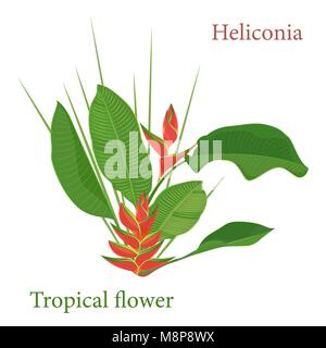 Branch tropical heliconia flower leaves. Watercolor realistic drawing in flat color style. isolated on white background - Stock Photo