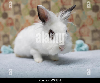 Cute little rabbit lionhead with beautiful natural make-up around eyes - Stock Photo