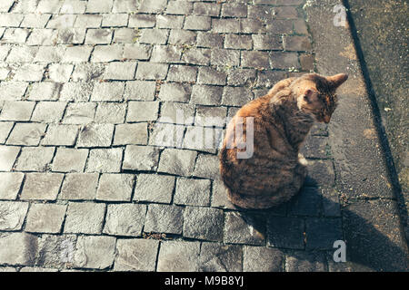 Sitting cat in Houtong cat village, Taiwan - Stock Photo