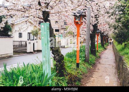 Cherry blossoms road with lanterns in Hirano Shrine, Kyoto, Japan - Stock Photo