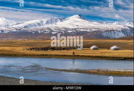 Flock of sheep with yurts and shepherd on the banks of Khoton Lake, snow-covered mountains in the back, Mongolia - Stock Photo