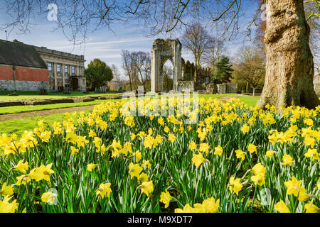 York, UK. 29th march, 2018. Daffodils in bloom and St Marys Abbey in The Museum Gardens York City Centre Credit: John Potter/Alamy Live News - Stock Photo