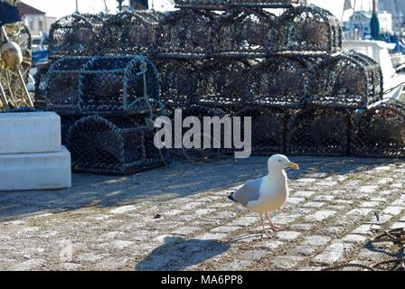 Creels and lobster pots at Arbroath Harbour - Stock Photo