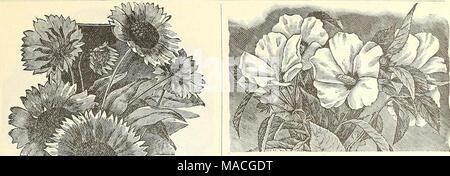 . Dreer's wholesale price list for 1902: flower seeds, bulbs, aquatics plants vegetable seeds, tools, implements, fertilizers, etc., etc . - Stock Photo