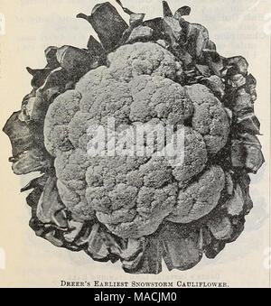 . Dreer's wholesale price list autumn edition September to December 1900 : seasonable flower vegetable seeds, fertilizers, tools, etc . Dkeer's Earliest Snowstorm Cauliflower. Large Jersey Wakefield (Charleston). Beans for Forcing. Triumph of the Frames. This variety leads all others for forcing, being two weeks earlier than any other ; its dwarf compact habit allows of their being planted much closer than other sorts. Abundant cropper, pods very tender, of finest quality. Pt. 25 cts.; qt. 40 cts. , j-_ ., Cabbage. Early Jersey Wakefield. The best and most reliable sort for market gardeners. S - Stock Photo