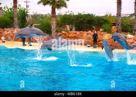 Athens, Attica / Greece - 2018/03/31: Common bottlenose dolphins, known as Atlantic bottlenose dolphin or Bottle-Nosed Dolphin, during a sea life show - Stock Photo
