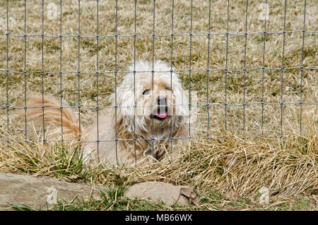 A cute mixed breed adopted puppy sits behind a fence, just waiting to play! - Stock Photo