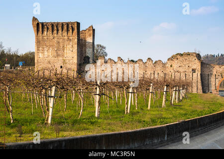 Vineyards in Borghetto sul Mincio with medieval bridge ruins in the background. Veneto, Italy. - Stock Photo