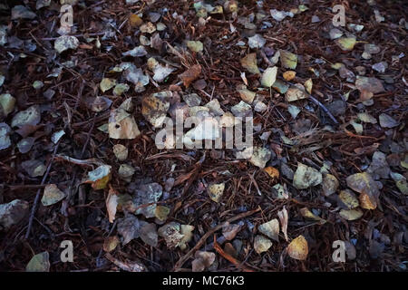 Fall Leaves and Mulch - Stock Photo