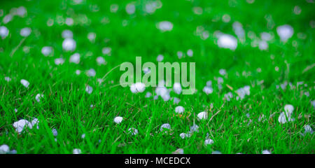 Flakes and balls of ice crystals on green grass after a hail storm appearing scenic in a shallow depth of field landscape image - Stock Photo