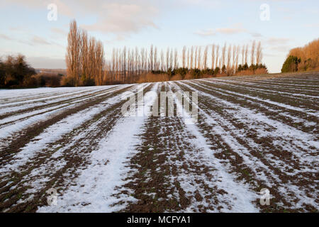 Melting snow in furrows in ploughed field with bare poplar trees in distance, Ebrington, Cotswolds, Gloucestershire, England, United Kingdom, Europe - Stock Photo