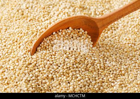 spoon of white quinoa seeds on quinoa background - close up - Stock Photo