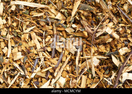 Garden mulch produced by shredding waste woody plant prunings, UK. - Stock Photo