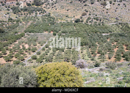 Crete landscape, green hills, blue sky, olive trees and brush. Scenic, panoramic  brochure photo. - Stock Photo