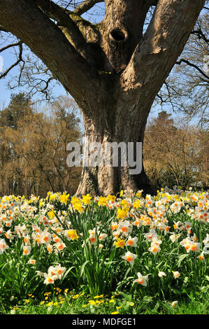 Springtime 2018 in Country Garden Masham Yorkshire UK - Stock Photo