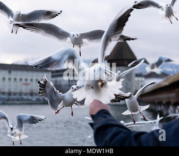A flock of seagulls in the air at Lucern's Chapel Bridge in Lucerne, Switzerland - Stock Photo