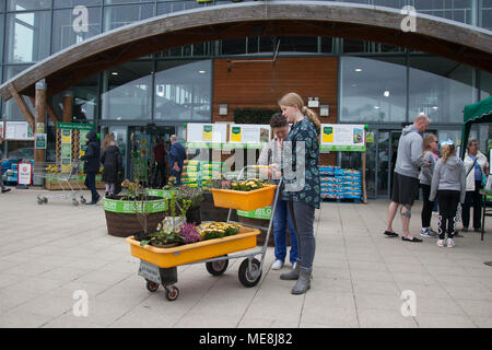 Southport, Merseyside, UK 22 April 2018. Gardeners flock to Garden Centres as the warm weather continues, Springtime bonanza for local gardening stores with buyers taking advantage of discounted items. - Stock Photo