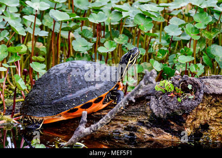 Relaxation on the log. - Stock Photo
